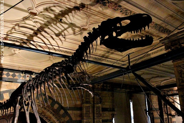 Natural History Museum 30